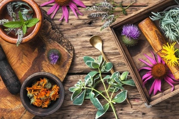 digestive health herbs